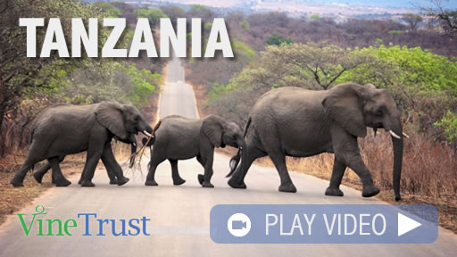 Vine Trust Tanzania Promotional Video